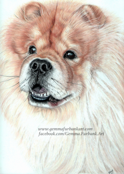 Chow Chow. Sold